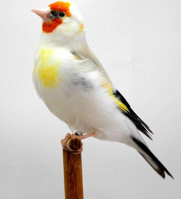 Magnifique plumage