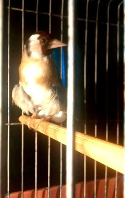 sublime oiseau  de : Japoni Sai