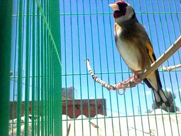 Un oiseau du rêve wooooow طائر الأحلام