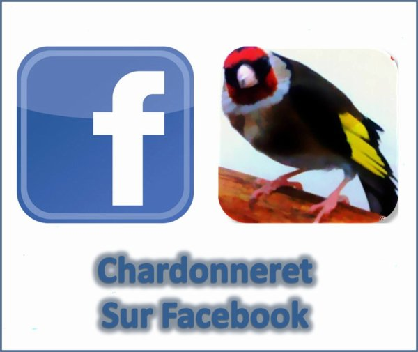 https://www.facebook.com/ChardonneretGolden/