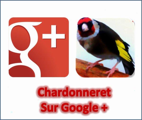 https://plus.google.com/u/0/b/115400993462974225697/+ChardonneretGolden