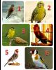choisissez votre oiseau préféré de : Oussama Ski