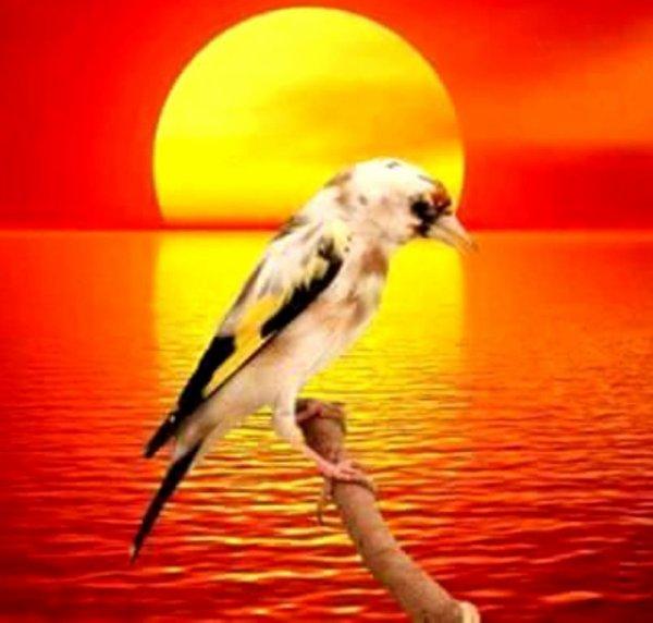 Au bout du rêve <3 Le Chardonneret toujours le TOP (y) <3 de : Habibo Lahbib