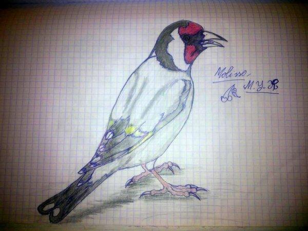 Magnifique dessin merci (y) de : Youssfe Mohamde Rida