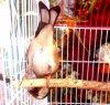 Oiseau très drôle et intelligent  de : Ôçęan Õćęån #الحسون #المقنين #القرديل #سهره  #Chardonnerert #Canari #Mulet #MuletOiseau #Oiseau #Birds #Animaux #Goldfich #Jilguero #Cardellino #καρδερίνα #Sakakuşu #Chien #Chat #Pigeon #Cheval #Science #Reptile #Poisson #Plantes #Hibiscus #Alger #Algérie #Tunisie #Maroc #ChardonneretGolden