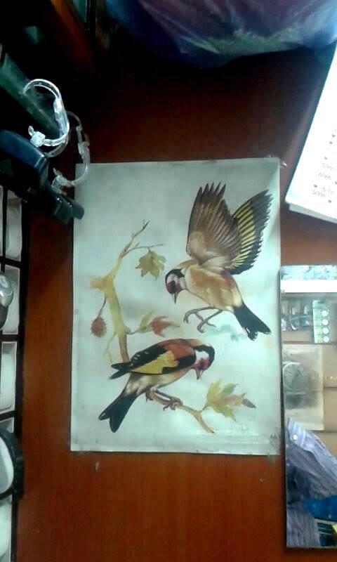 Magnifique dessin du Chardonneret par : Omar Mekki Abo Hady #الحسون #المقنين #القرديل #سهره #Chardonnerert #Canari #Mulet #MuletOiseau #Oiseau #Birds #Animaux #Goldfich #Jilguero #Cardellino #καρδερίνα #Sakakuşu #Chien #Chat #Pigeon #Cheval #Science #Reptile #Poisson #Plantes #Hibiscus #Alger #Algérie #Tunisie #Maroc #ChardonneretGolden