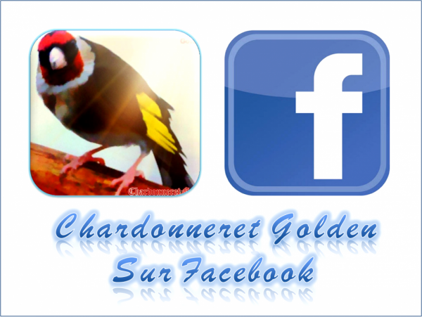 https://www.facebook.com/ChardonneretGolden/