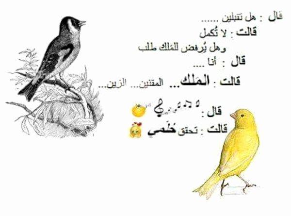 Très belle histoire d'amour entre Le Chardonneret Meknin El Zin et la belle Canari jaune  Meknin El Zin : Tu m'acceptes Canari jaune : arrête  et est ce que Le Roi on peut refuse sa demande  Meknin El Zin : moi  Canari jaune : Le Roi Meknin El Zin  Meknin El Zin : ??????? Canari jaune : mon rêve est exaucé https://www.facebook.com/ChardonneretGolden/  https://plus.google.com/+ChardonneretGolden  https://www.instagram.com/chardonneretgolden/  http://www.youtube.com/ChardonneretGolden  http://www.twitter.com/ChardonneretGol  http://chardonneretgolden.tumblr.com/  https://www.pinterest.com/chardonneretGol/  http://chardonneretgolden.skyrock.com/  https://chardonneretgolden.blogspot.com/  http://chadonneret.e-monsite.com/  #الحسون #المقنين #القرديل #سهره  #Chardonnerert #Canari #Mulet #MuletOiseau #Oiseau #Birds #Animaux #Goldfinch #Jilguero #Cardellino #καρδερίνα #Sakakuşu #Chien #Chat #Pigeon #Cheval #Science #Reptile #Poisson #Plantes #Hibiscus #Alger #Algérie #Tunisie #Maroc #ChardonneretGolden