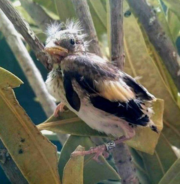? Le Chardonneret Toujours le Meilleur ? ❤ ?? l #الحسون #المقنين  #Chardonnerert #Canari #Mulet #MuletOiseau #Oiseau #Birds #Animaux #Goldfinch #Jilguero #Cardellino #καρδερίνα #Sakakuşu #Chien #Chat #Pigeon #Cheval #Science #Reptile #Poisson #Plantes #Hibiscus #Alger #Algérie #Tunisie #Maroc #ChardonneretGolden #CanariBK #BilelKios