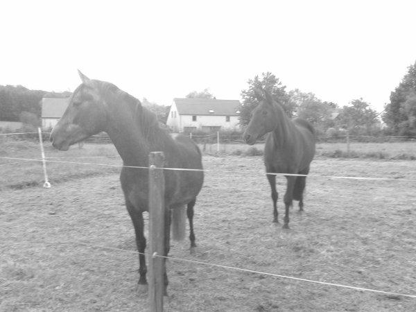Petite série en noir et blanc