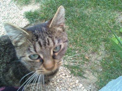 Mon chaton ♥