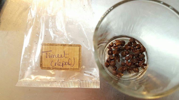 Macarons à la poudre de noisette, ganache chocolat poivre de Timut
