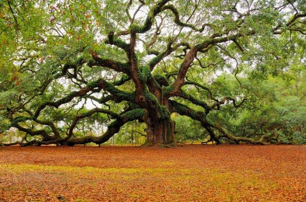S'assoir sous cet arbre et rêver