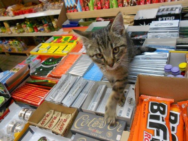 mon chaton jazzy