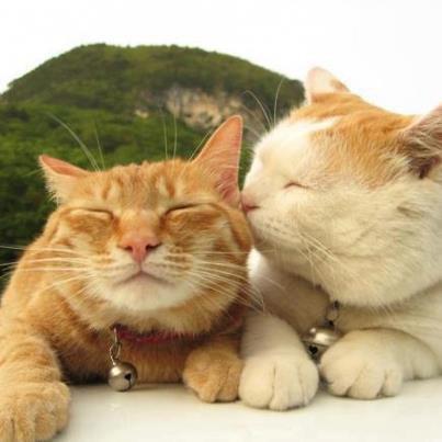 Mes deux chats chéris en vacance <3