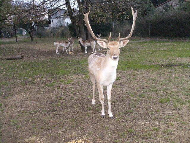 """Je vous présente son """" altesse """" Bambi qui régne sur 6 daines !"""