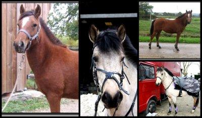 Pouliche poney <3