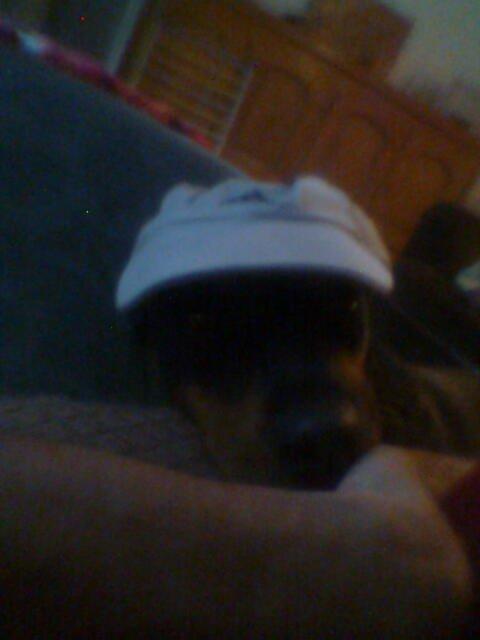 Waaarrrfff, elle a du chien avec ma casquette...