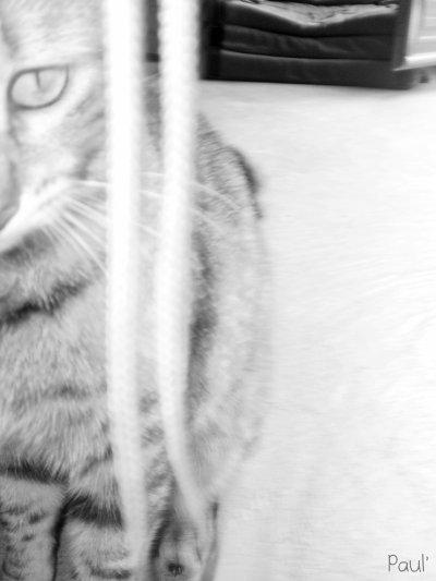 Such Cat'