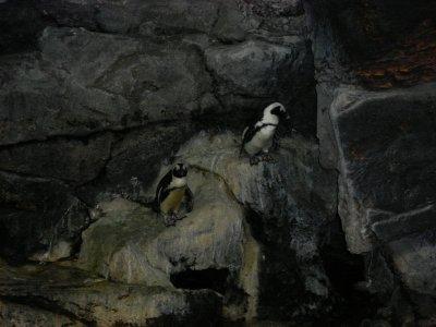 ly pinguin2....