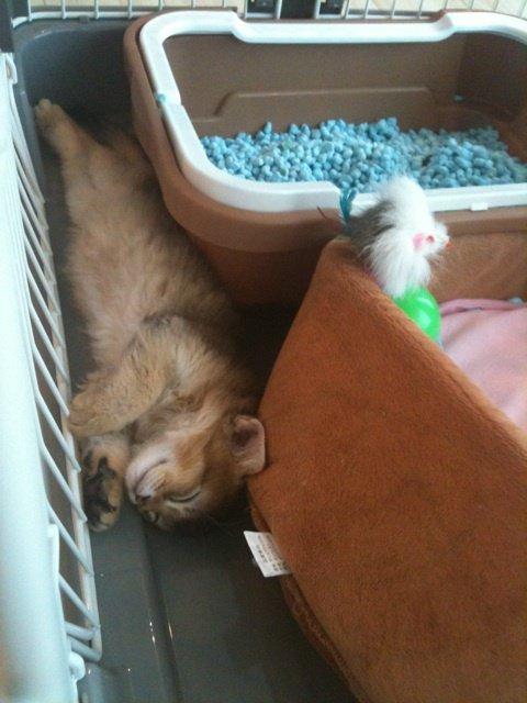 ✿ -- Blog ~ Mao's room: Il aime beaucoup les jouets -- 8 mars 2012