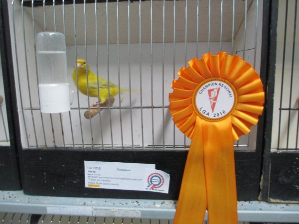 Agate opale jaune intensif N° 096/16 champion avec 90pts