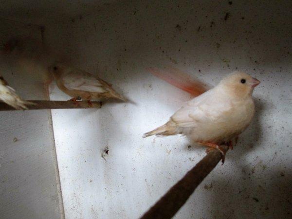les mandarins quittent le nid (la suite)
