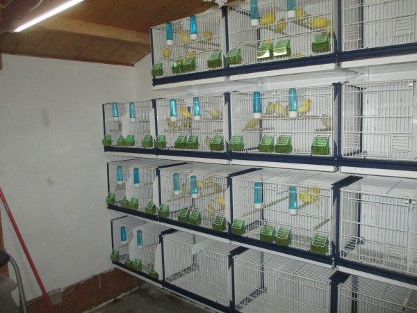 suite et fin du montage de mes cages Italgabbie et mise en place oiseaux