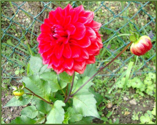 mes petites fleurettes !