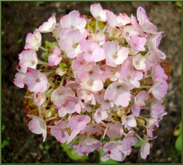 les fleurs de mon petit jardin