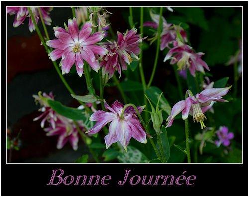 """Mon amie Annie du groupe """"Lacourdesgrands"""" fait de merveilleuses photos regardez !"""