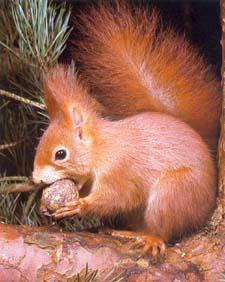 Et Hop au dodo le nezcureuil