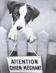 Le permis pour chiens