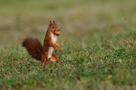 Il était une fois l'écureuil !