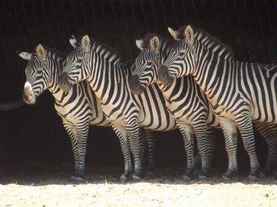La réserve Africaine de Sigean
