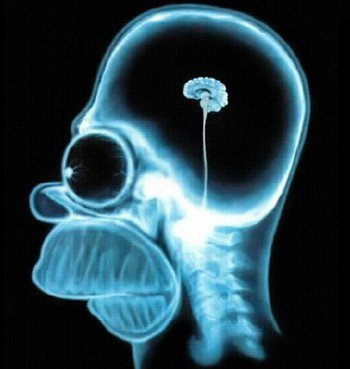 La semaine du cerveau :)