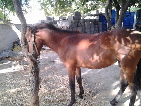 cheval d'un ami c'est moi qui a pris cette foto