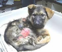 La maltraitance des animaux