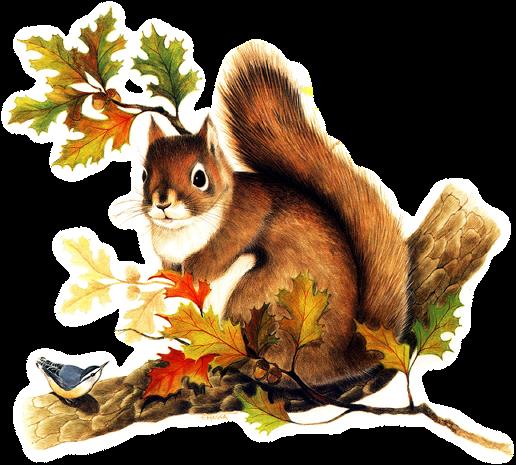 L'écureuil et la feuille...