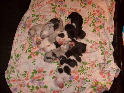 Les bébés sont nés!!!