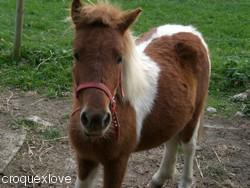 Tiponey .. Un nom banal mais un poney tellement extraordinaire ♥