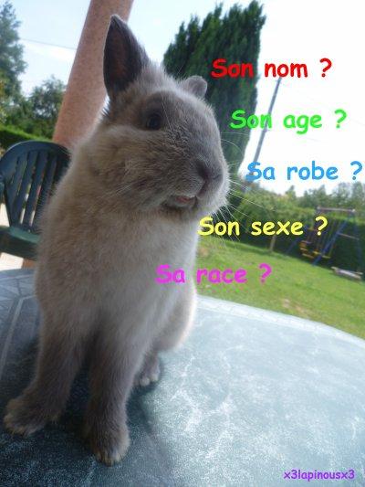 Si toi aussi tu a un lapin présante le...