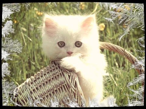 Que pensez-vous des chats?