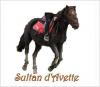 Sultan-dAvette
