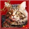 misscats666