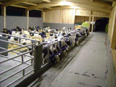 Stabulation vaches laitières en lumière !