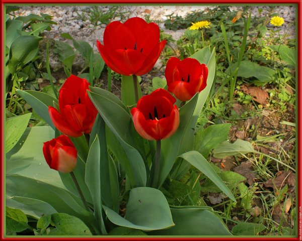 Glorieux jubilé ( le 9 Avril 2010 )
