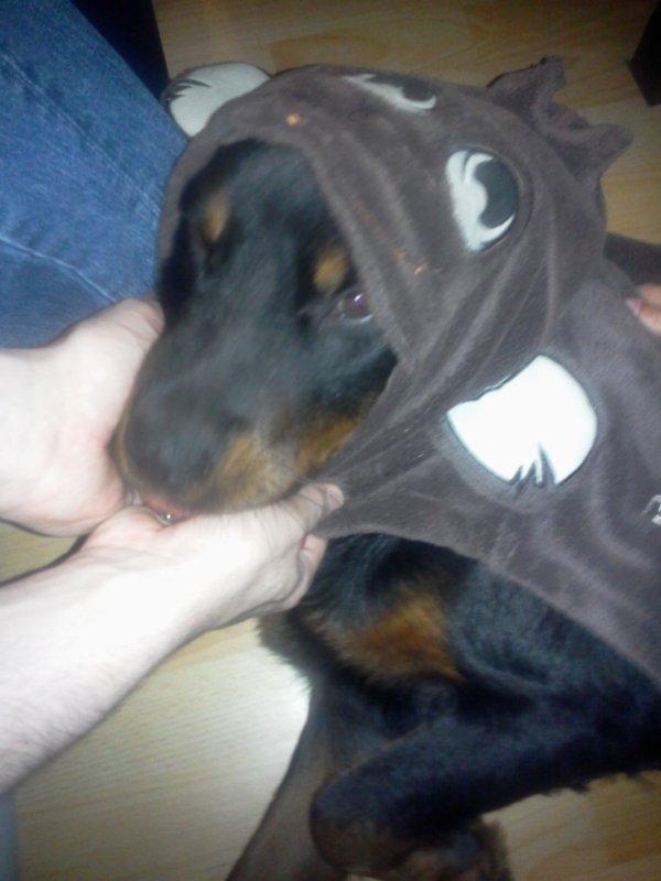 rottweiler chien méchant ptdrrrrrrrrrrrrrrrr