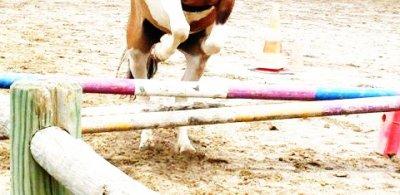 Open---x3. «Un cavalier qui monte avec un gilet de protection est un cavalier qui n'a pas confiance. » Photos, Montages, Textes.