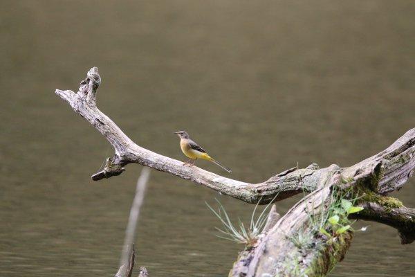 Les oiseaux de Boutissaint